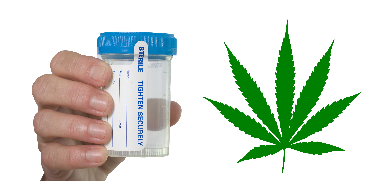 THC Detox Kits: How I Passed a Drug Test Using a Marijuana Detox Kit